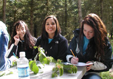 Forestry Competition